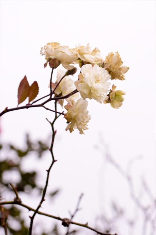 mizunomori_14_1_22_20.jpg