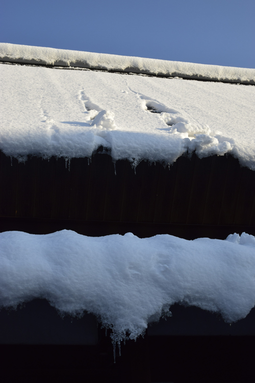 snow_14_1_20_1.jpg