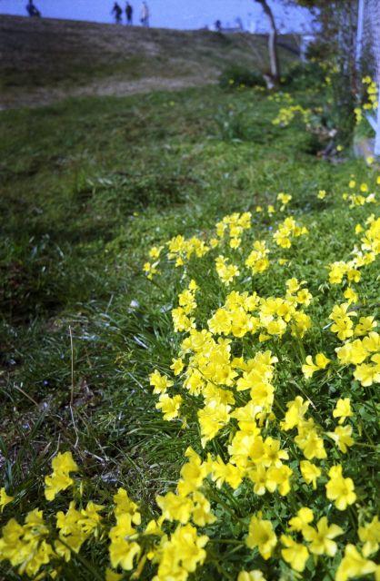 春の予感04a