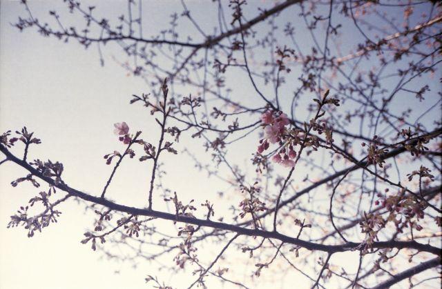 春の予感05c