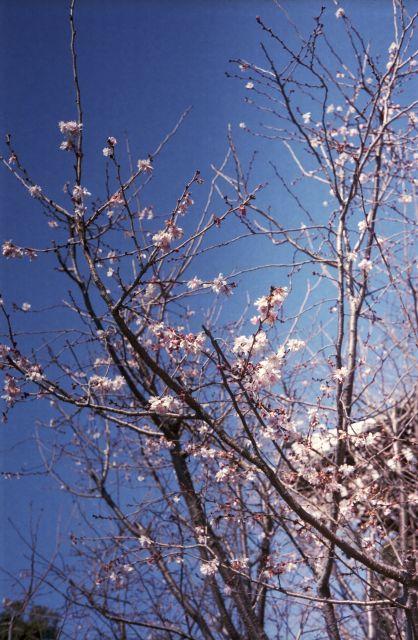 春の予感05a
