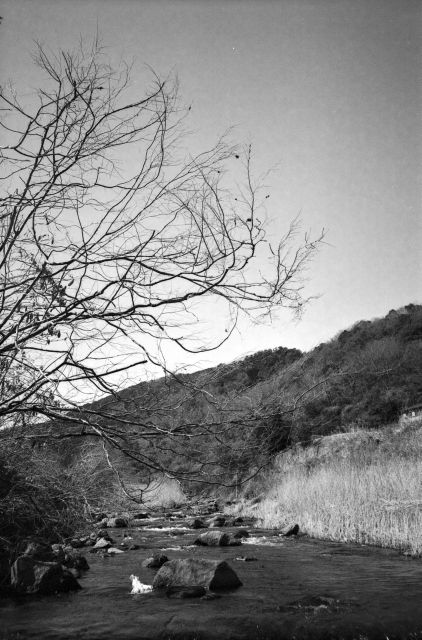 深山幽谷21a