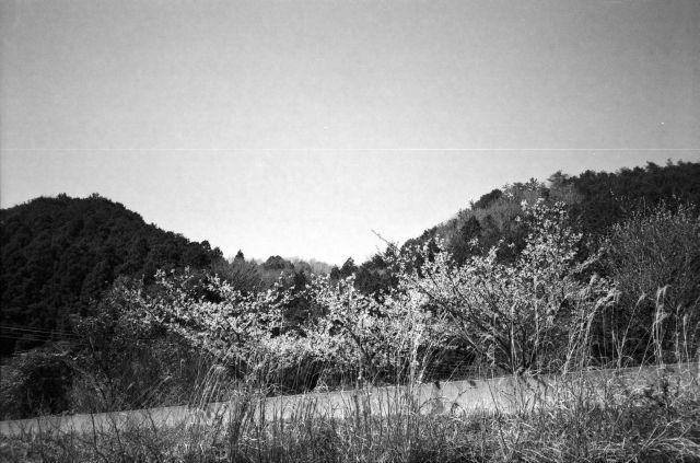 深山幽谷22c