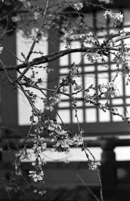 春の予感07b