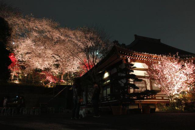 桜2013-05d