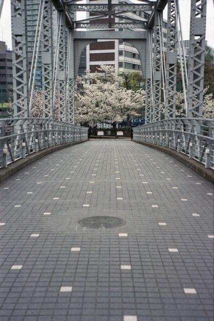 桜2013-07e