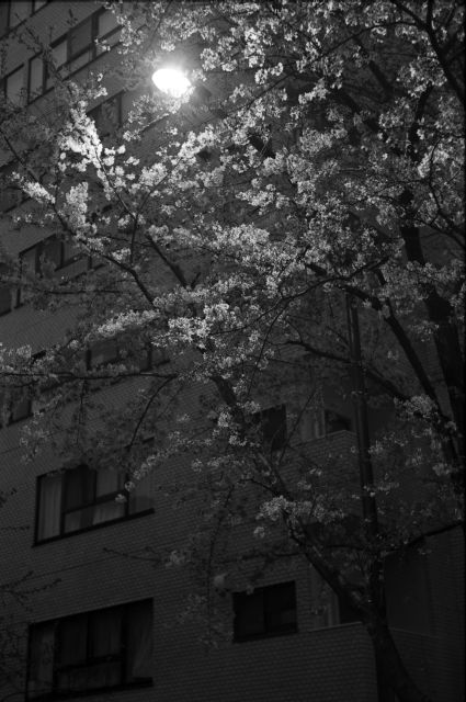 桜2013-09f