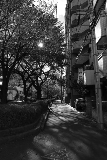 桜2013-11c