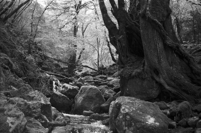 深山幽谷24c