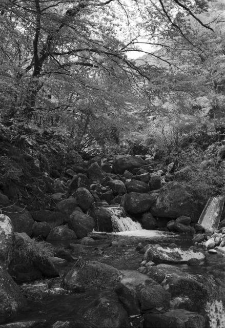 深山幽谷24b