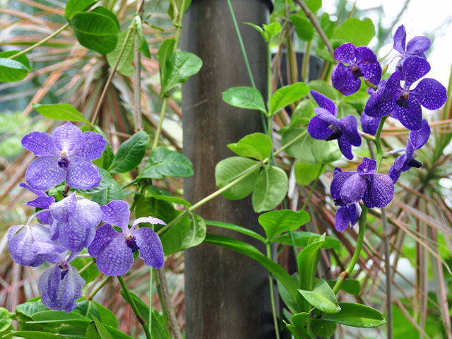 青色系の花