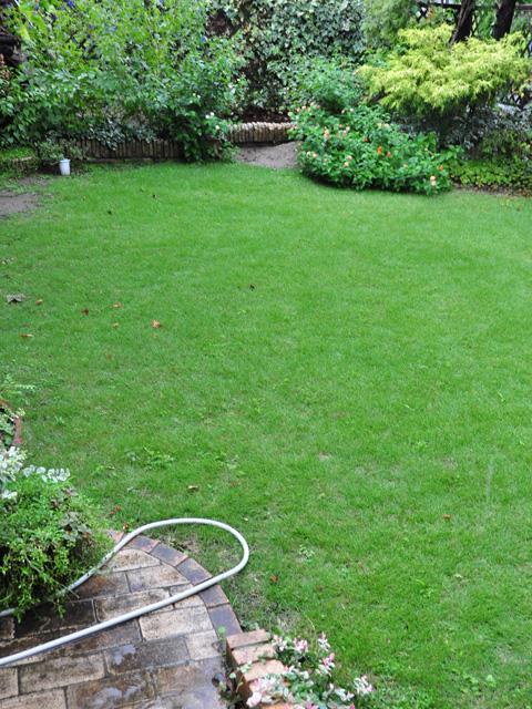 瑞々しい芝生