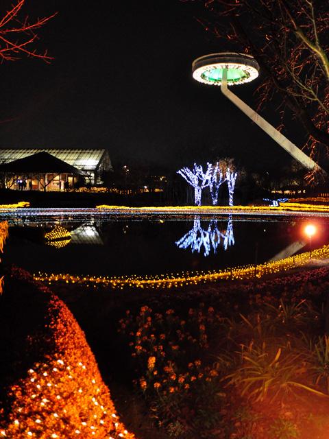 池に写る灯り