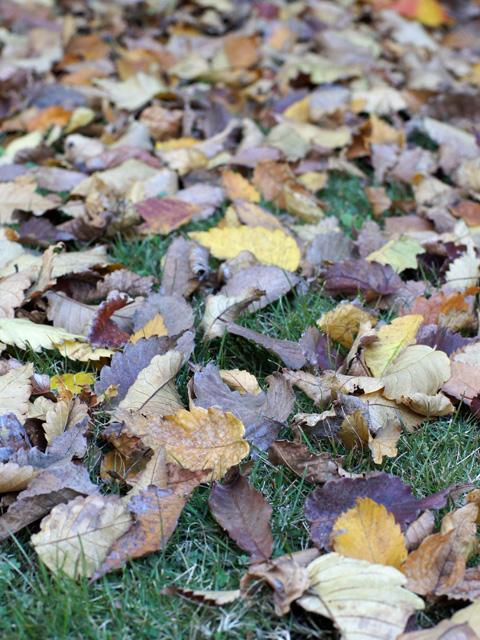 庭の枯れ葉
