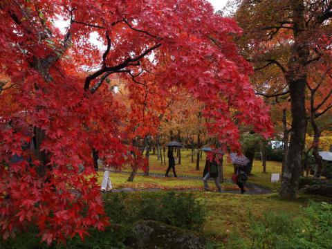 箱根美術館 紅葉 '12