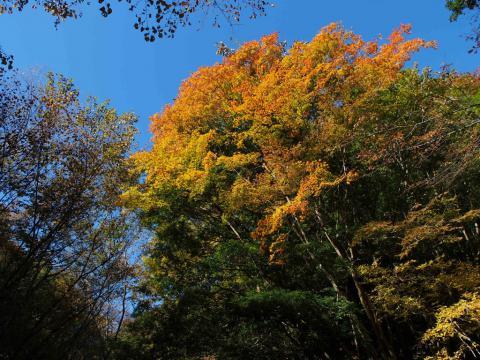 畦ヶ丸の紅葉