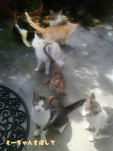 猫家族全員集合