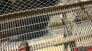 湯西川ダムキャットウォーク
