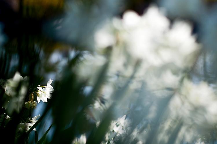 白鳥庭園-15