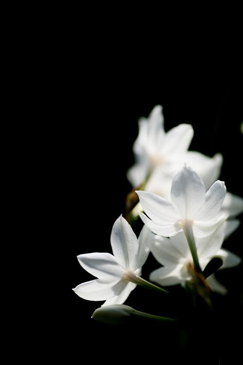 白鳥庭園-7
