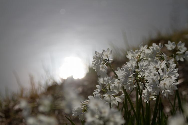 白鳥庭園-5