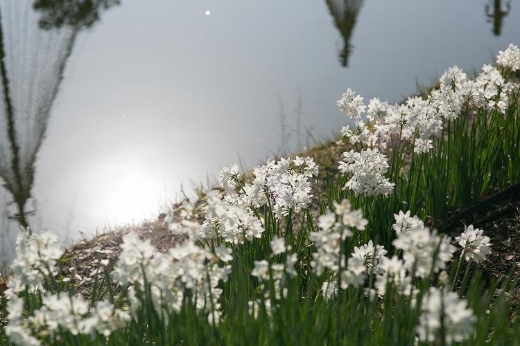 白鳥庭園-3