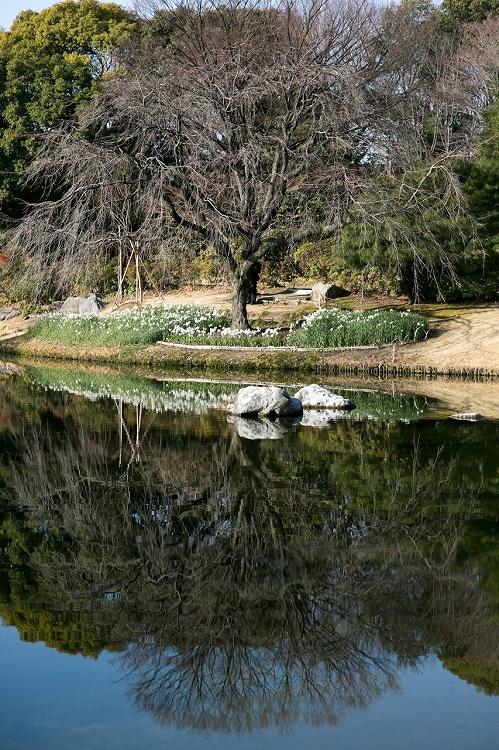 白鳥庭園-1