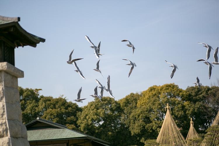 白鳥庭園-30