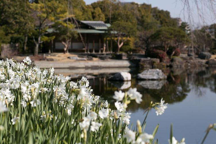 白鳥庭園-19