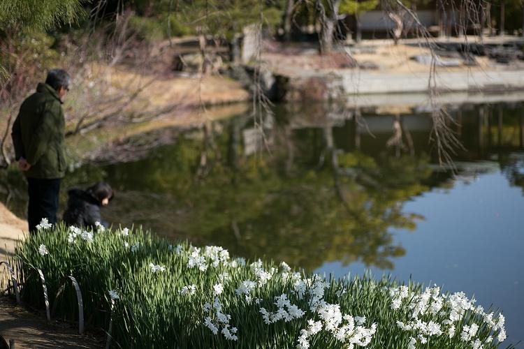 白鳥庭園-16