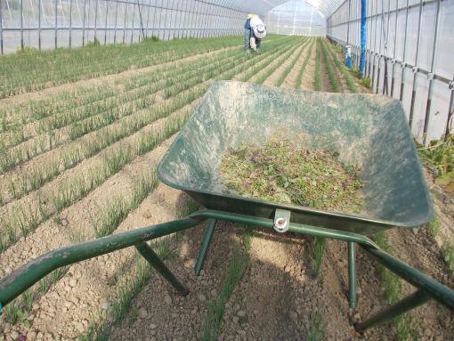 20120514_一輪車にたまる雑草