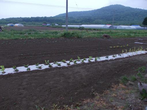 20120608_自家用畑