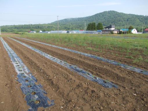 20120618_アスパラ畑