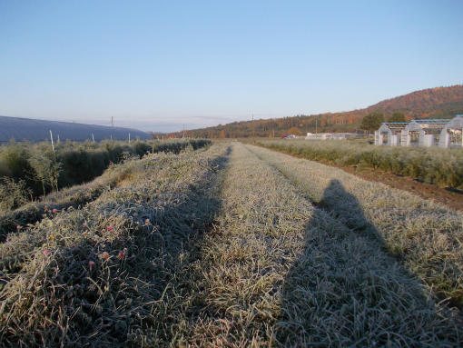 20121025_農道の草につく霜