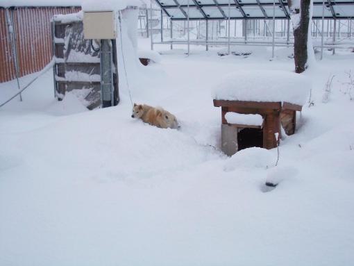 20121122_雪をかき分ける大ちゃん