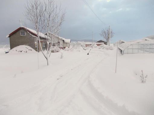 20121122_雪景色
