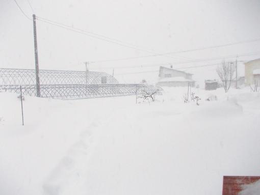 20121209_今日も吹雪