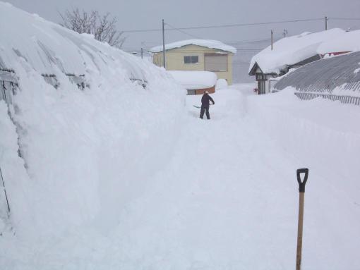 20121210_ハウス脇の除雪