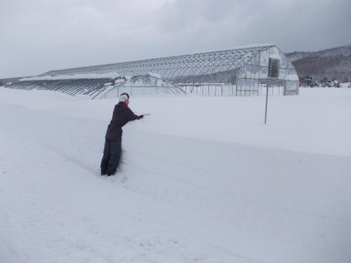 20121210_少ないところでこれだけ積雪