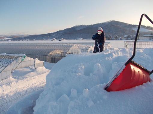 20121211_雪下ろし中