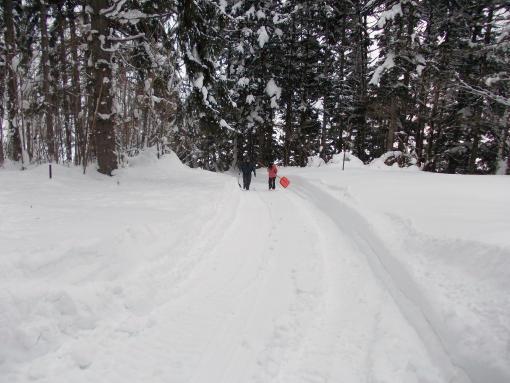 20121230_ブロワーで除雪した参道