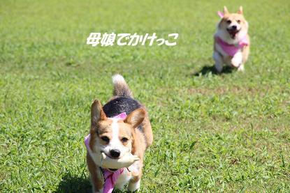 a_7582.jpg