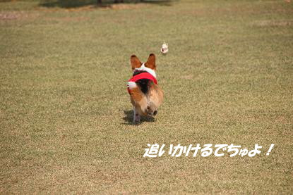 a_8681.jpg