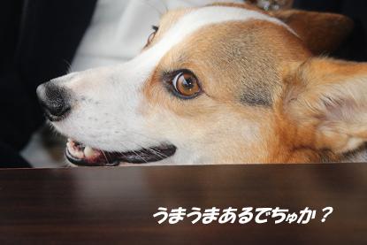 a_9805.jpg