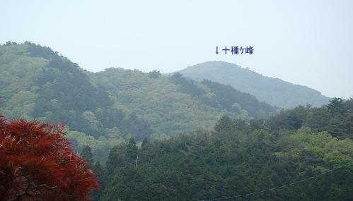 十種ケ峰のヤマシャクナゲ 058-001