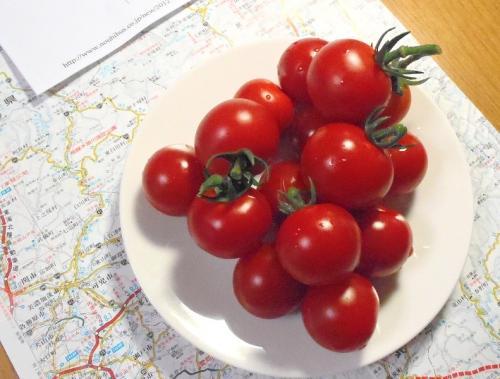 ミニトマト収穫 004-001