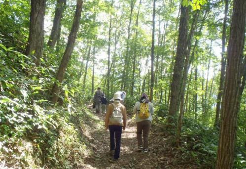 森林セラピー 032-001