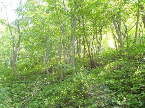 森林セラピー 028-001