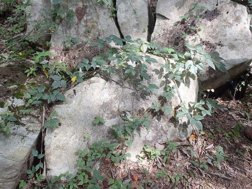 森林セラピー 030-001