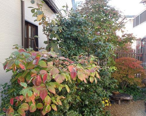 庭の紅葉 012-001